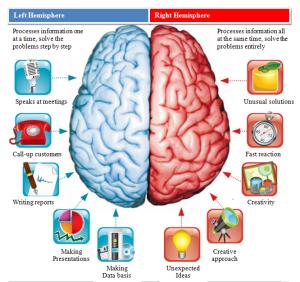 brain-hemispheres-comparation