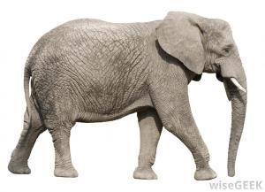 Aelephant