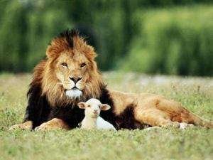 lion-and-the-lamb-793910