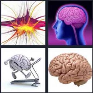 A4-Pics-1-Word-Level-536-Answer-Brain-300x300-4222-734