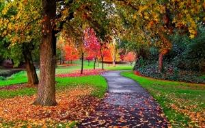 AAutumn-in-the-Park-autumn-25517310-1440-900