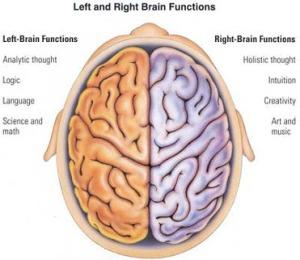 Abrain-hemispheres