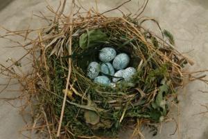Aguira_cuckoo_nest
