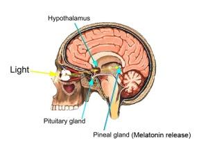 Amelatonin-sleeping-aid
