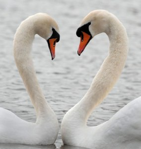 AWeek-in-wildlife-A-pair