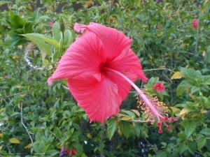 flower_large_stamen_2030228