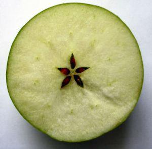 apple_star