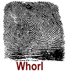 whorl_finger_print