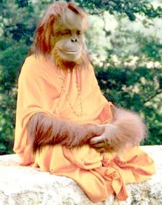 monkey-guru