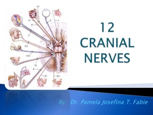 12-cranial-nerves-1-728