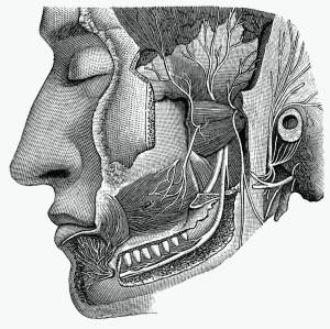 cranial-nerves