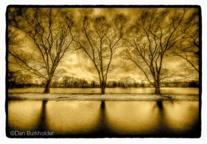 """Three Trees near Water, New York State"""