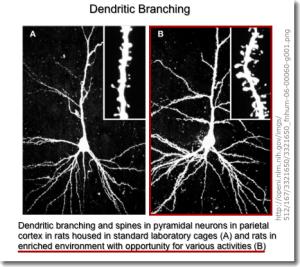Dendritic_Branching