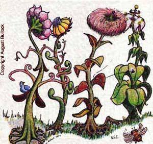 Asex-plant-subliminal-image