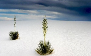 white-sands-new-mexico-1920x1200