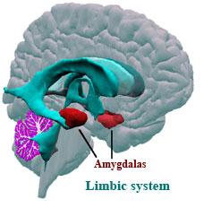 AAADSFamygdala