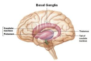Abasal_ganglia