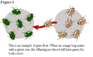 fig 3 gene flow