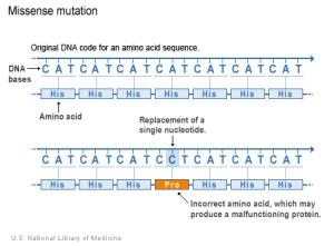 mutation-missense-9958_1