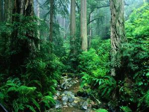 ABABASB(South America) - Amazon