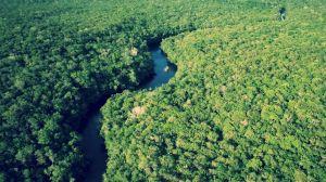 aBASBDSDBASDBthe-amazon-rainforest-1920x1080