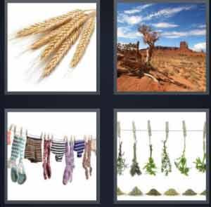 W4-pics-1-word-grain-desert-hanging-clothes-hanging-plants-300x295