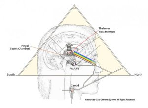 6pineal-gland