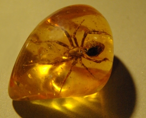 FSpider_in_amber_(1)