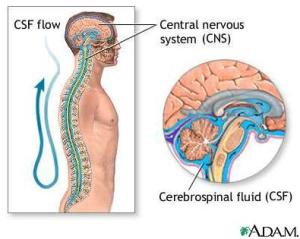 Lcerebrospinal_fluid-13295