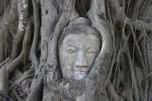 Rsiddhartha gautama buddha
