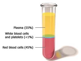 Pblood_plasma-630