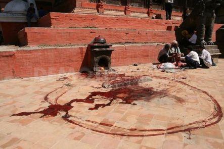 1254224037-ritual-of-animal-sacrifices-in-kathmandu150497_150497