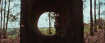 23-hole-in-tree