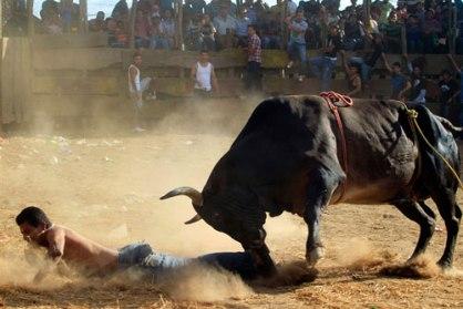 angry-bull