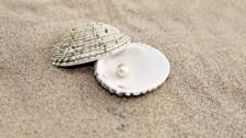 clamshellpearl-410830
