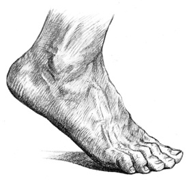 foot-anatomy-6