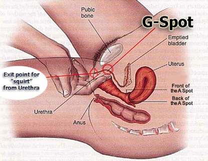 Gspot and squirt diagram finished