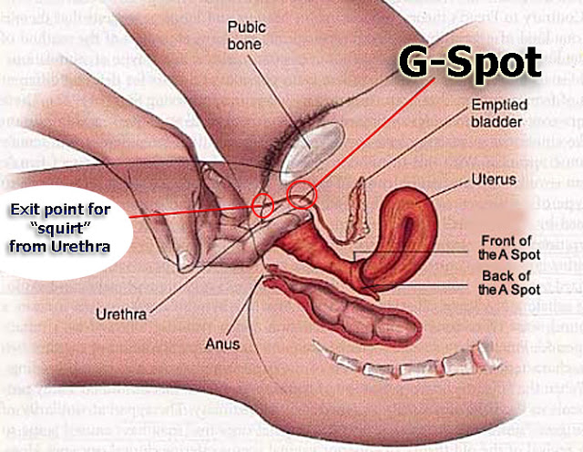 diagram of girl squirting