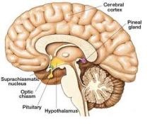 How-To-Stimulate-The-Pineal-Gland-To-Produce-More-Melatonin