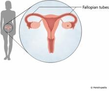 physiology-fallopian-tubes