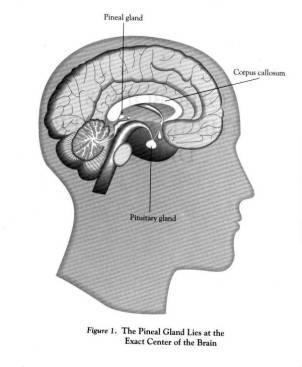 pituitarygland