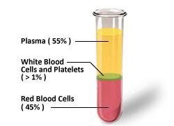 plasma-blood