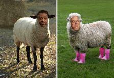 Sheeple_sheeple_bo_beeple_banana_fanna_fo_feeple