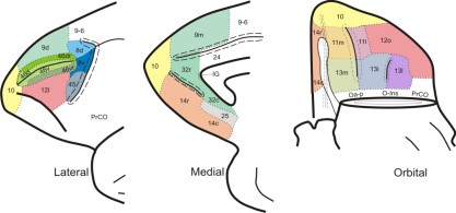 Brodmann_areas_of_frontal_cortex_of_monkey_brain_(Cebus_apella)