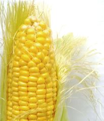 CoRn_on_the_cob