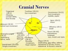 cranial-nerves-2.gif