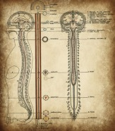 jacobs ladder spinal cord pineal