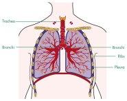 Lung_pLeuRa_2011_LaRge