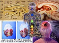 pineal-gland