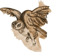portfoLio_brownowL1